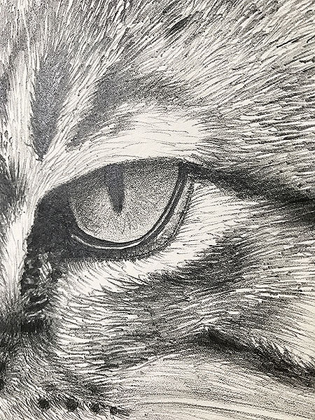 cat drawing close-up