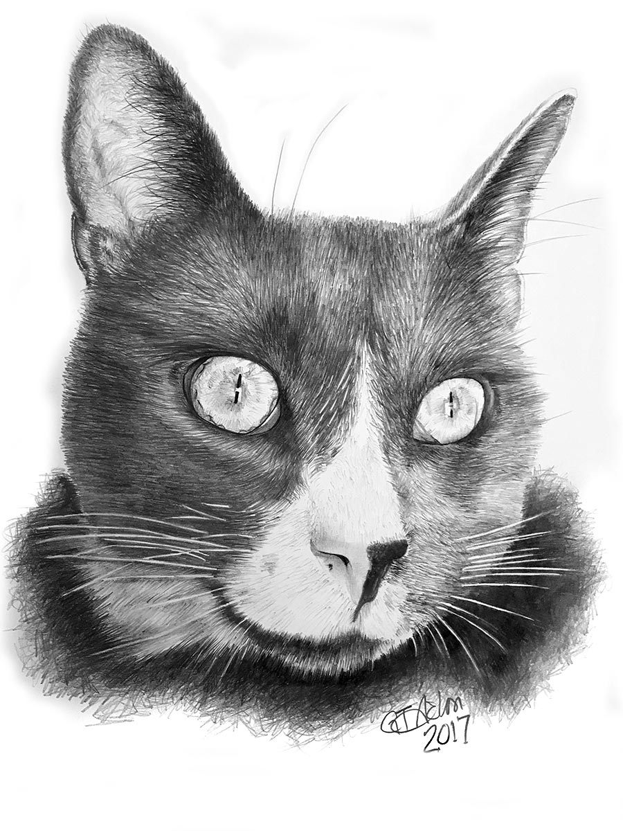 cat drawing - Onyx
