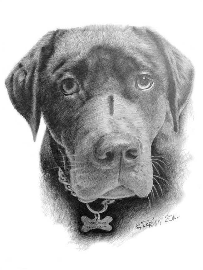Dogs Archives - Page 2 of 3 - Garry's Pencil Drawings