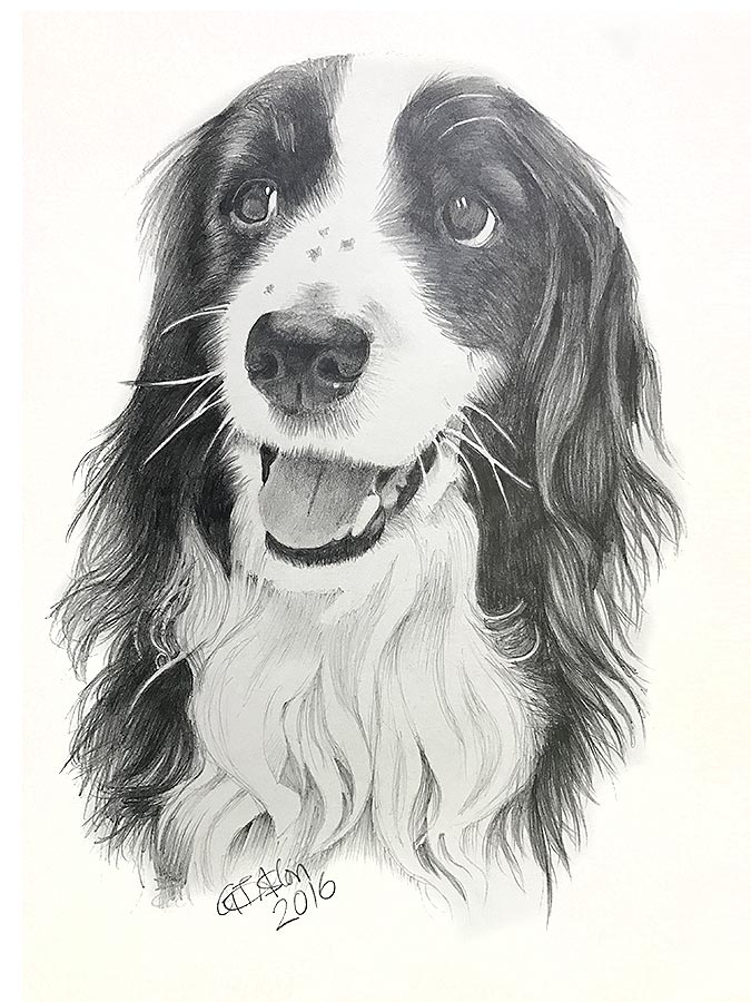 drawing of a long haired collie