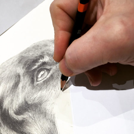 In progress drawing of Lucie the Black Labrador