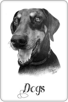 Dog pencil Portraits