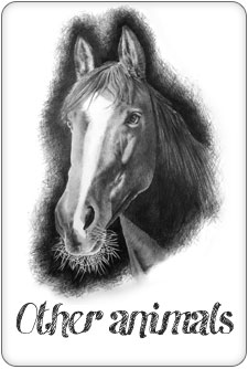 Pencil portraits of cats, horses and other pets