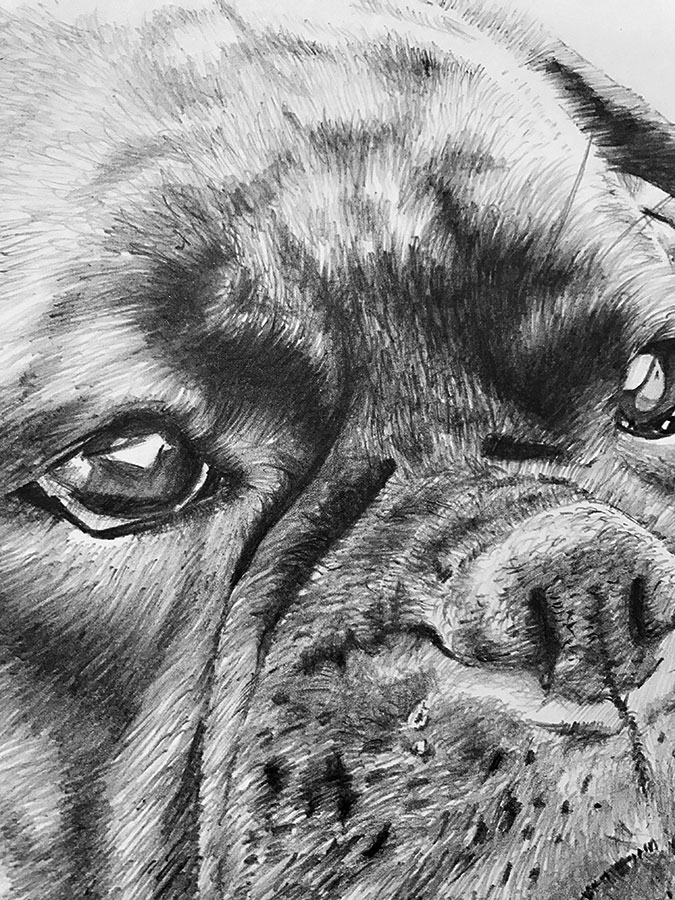 martha boxer dog drawing close-up