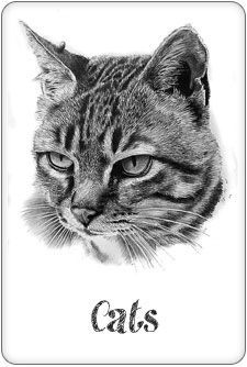 gallery of cat drawings