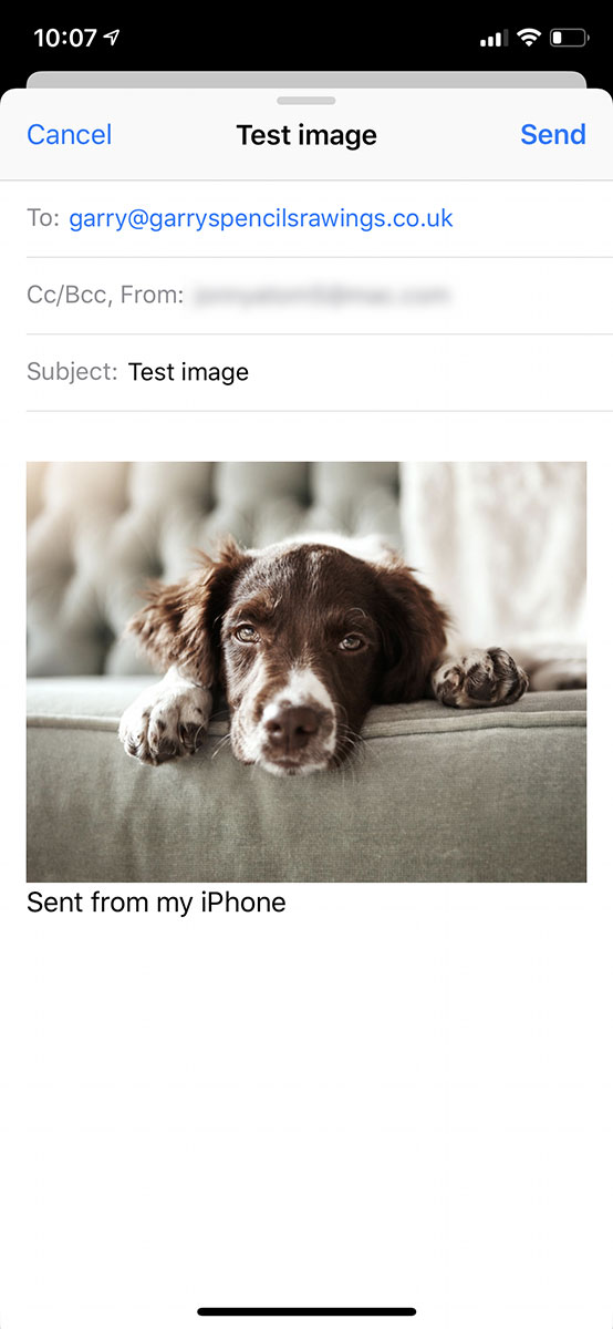 compose email to send dog pic
