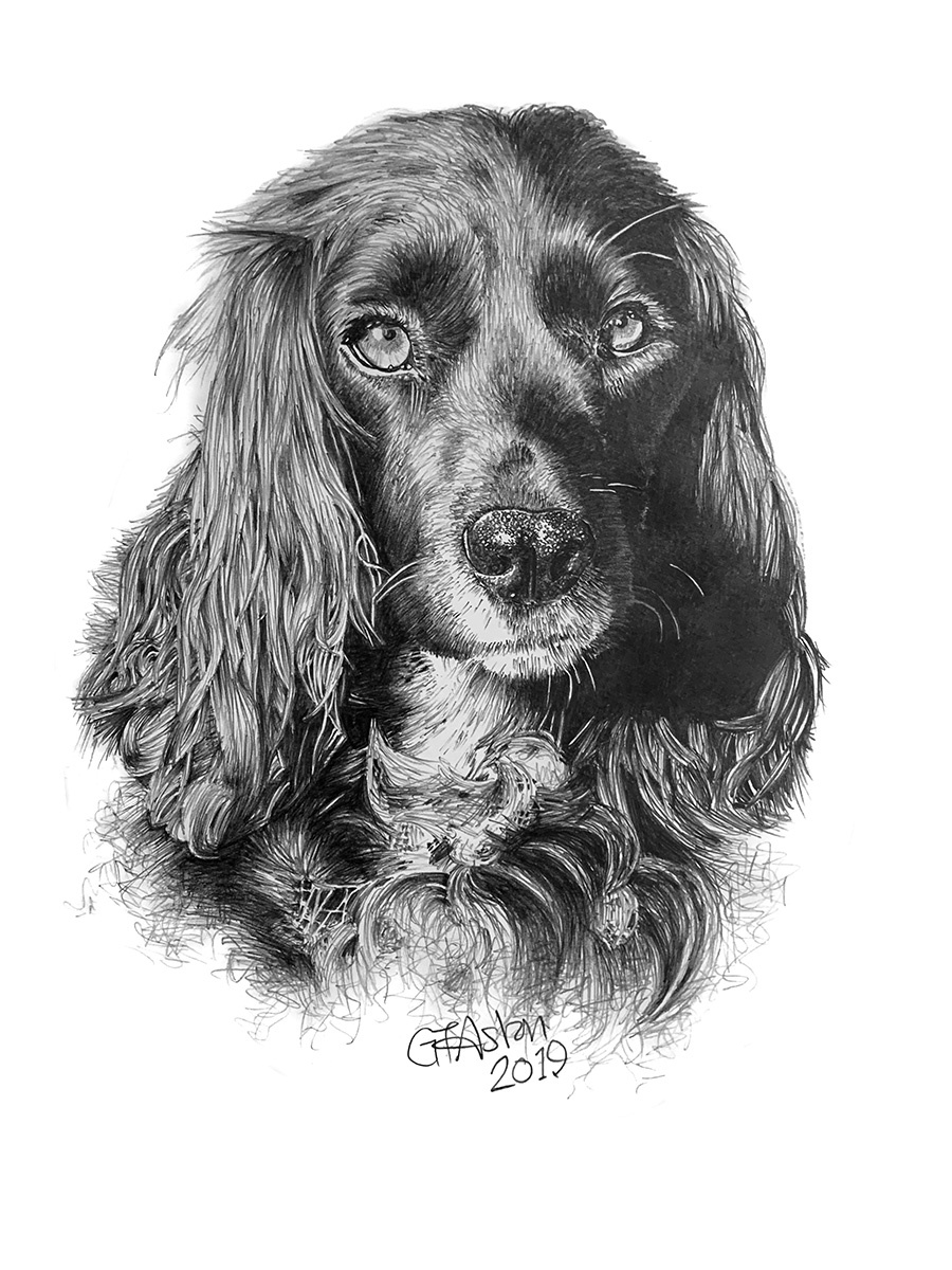 Cocker Spaniel pencil portrait - Layla